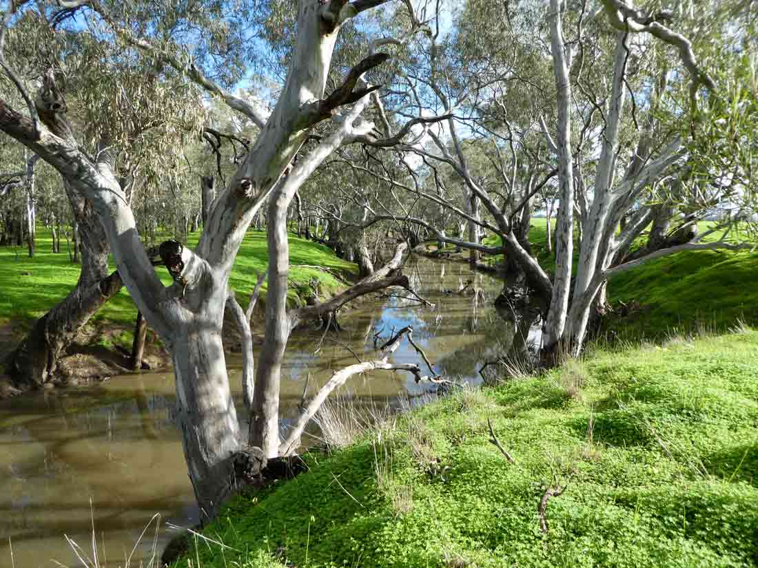 Campaspe River: Home of the elusive platypus